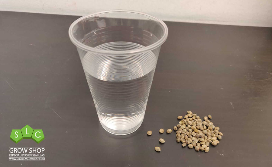 germinar semillas en un vaso de agua