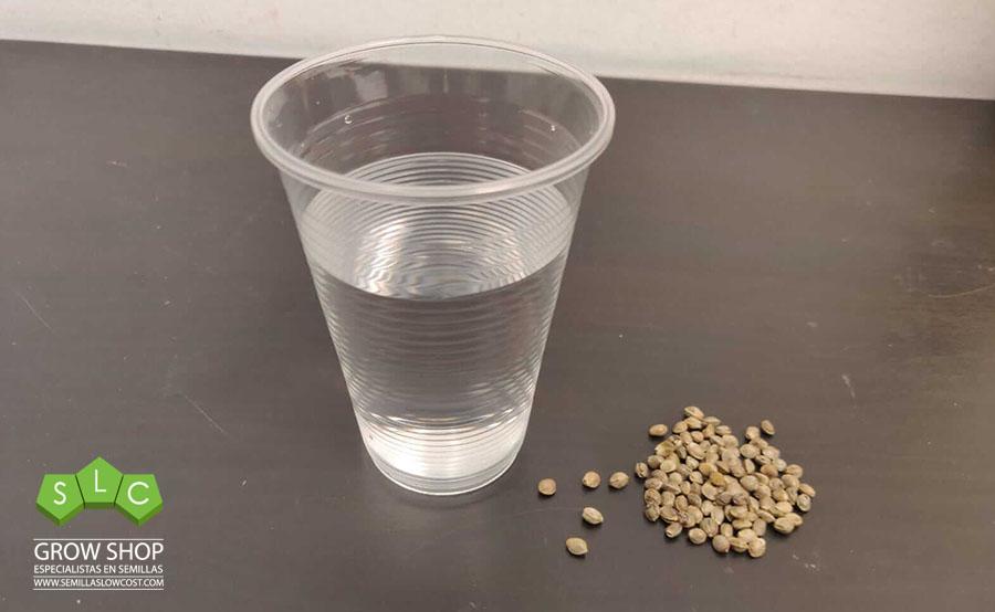 germinar vaso de agua