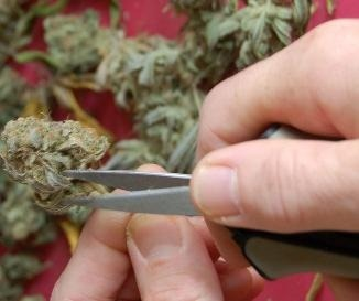 manicura marihuana
