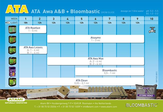 ATA-AWA-BLOOM.jpg