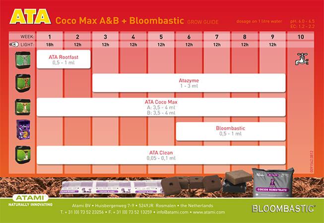 ATA-Coco-AB-BLOOM.jpg